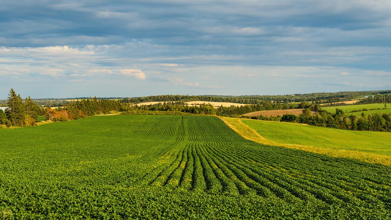 PEI Farm Field