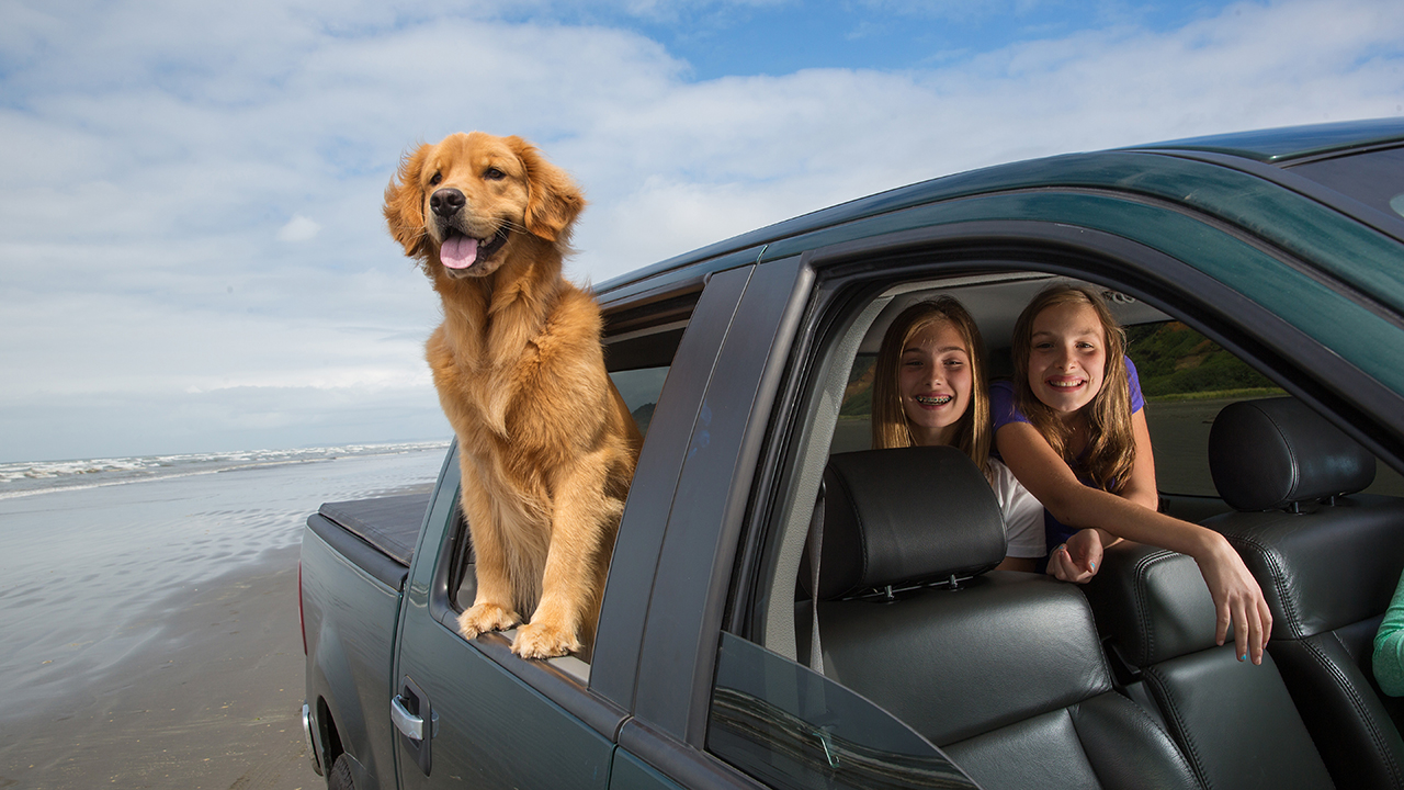 dog and children in car for auto insurance
